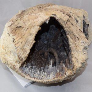 Agatized Fossilized Coral Geode